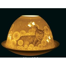 STARLIGHT GATTO 8*12